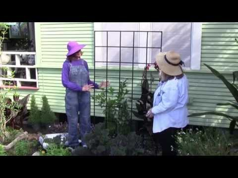 How to Espalier Citrus Trees