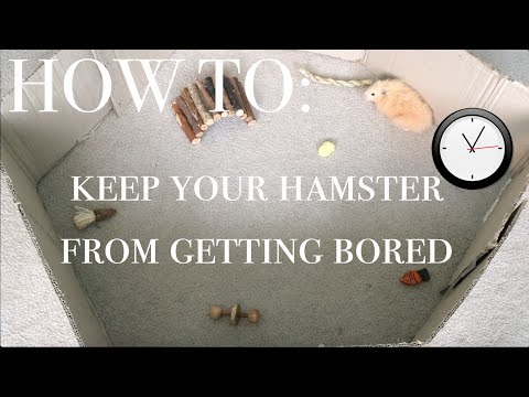 How To Keep Your Hamster From Getting Bored