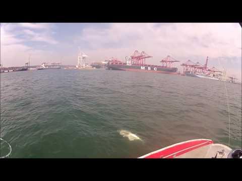 Garrick on artificial in Durban Harbour