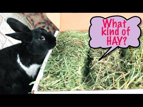 Which Hay is Right For Your Rabbit?