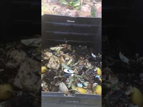 Pest Control For Compost