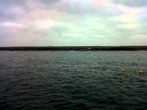 orcas off scrabster, scotland.