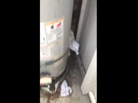 Rats in Orange County destroy water heater