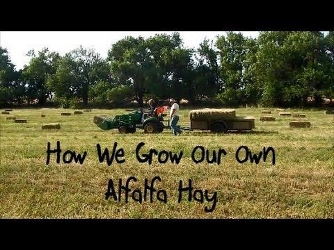 How We Grow Our Own Alfalfa Hay