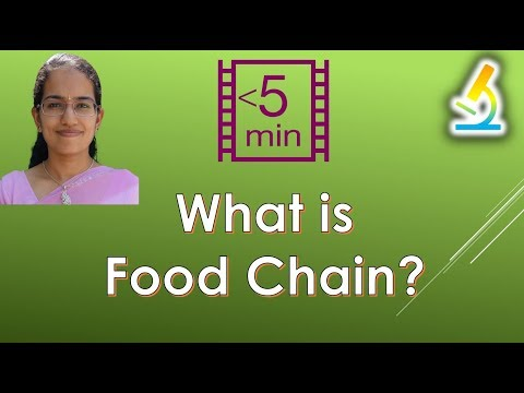 What is Food Chain? (Ecosystem)