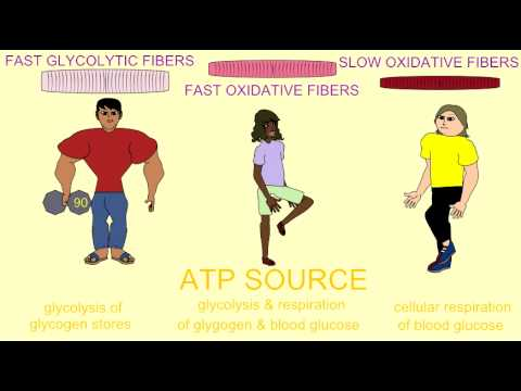 3 KINDS OF MUSCLE: ATP AND OXYGEN