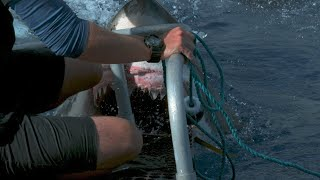 Look At The Risks Our Crews Take To Bring You The Magic Of Shark Week!