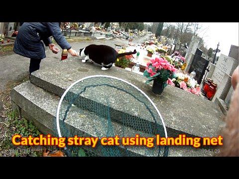 Catching a feral cat using landing net