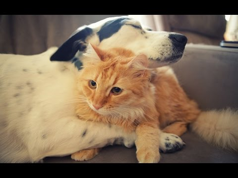 How Do I Train My Older Dog to Get Along with Cats?