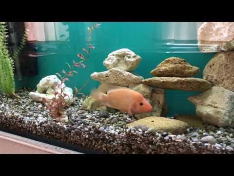 Fish tank decoration at home idea