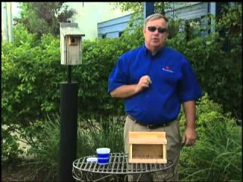 Attracting Bluebirds to your backyard By GardenAccentHeaven.com