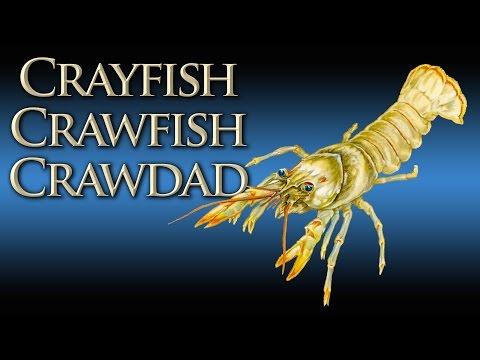Crawfish - Crayfish - Crawdad