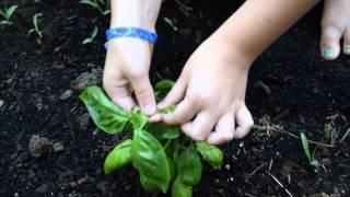 The Homestead Kids Teach You How To Prune Basil