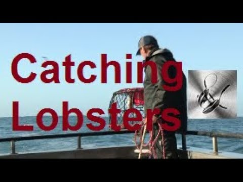 How to Catch Lobsters | The Hook and The Cook