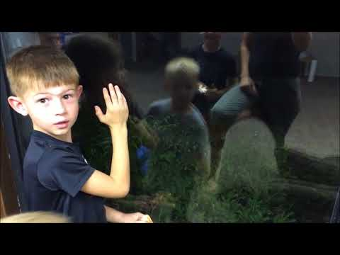 Hilarious Video Kids can't see the OBVIOUS frog on the window  Super Funny Cute