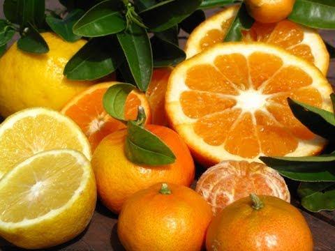 Growing Citrus Trees - Lemonade, Tangelo, Blood Orange & More!