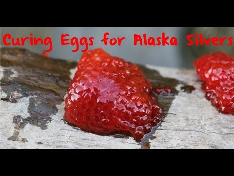 How to Cure Eggs for Alaska Silvers