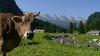 Switzerland Summer | HD