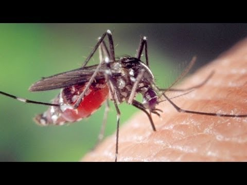 Make Garden Mosquitoes Disappear