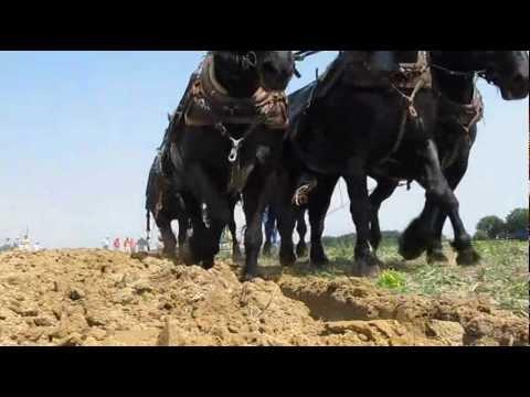 Percherons Plowing.wmv