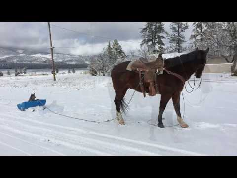 Weekend Farmgirl: Lockwood's Ranch Cowboy Sledding