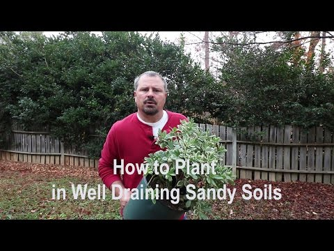 How to plant in sandy or very well draining soils. Proper tools, amendments, and techniques