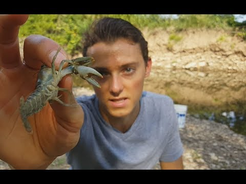 How to catch Crawfish /Crawdads with a Dip Net - Creek Fishing
