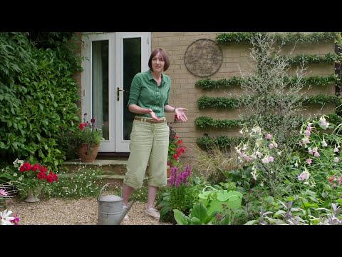 Urban Wildlife in your Garden