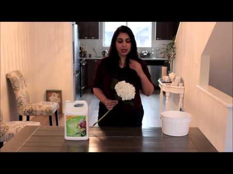 DIY Hydrangea Care and Handling