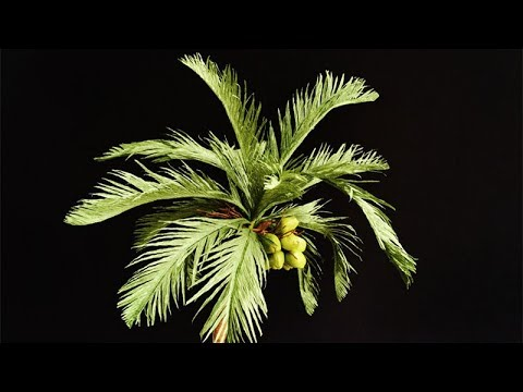 ABC TV | How To Make Coconut Tree From Crepe Paper - Craft Tutorial
