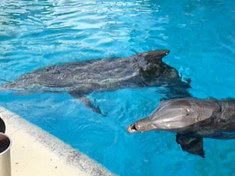 feeding dolphins.MOV