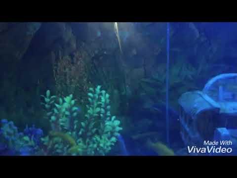 Goldfish laid eggs in tank