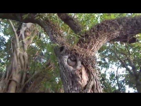 Beautiful Wild Honeybees In South Florida