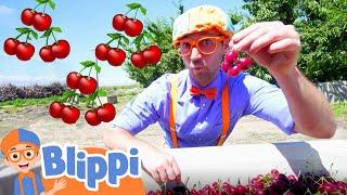 Blippi Visits a Cherry Farm | Healthy Eating For Children | Educational Videos For Kids