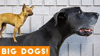 Ultimate Big Dog Compilation May 2018   Funny Pet Videos
