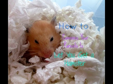 How To Convince Your Parents To Let You Get a Hamster!