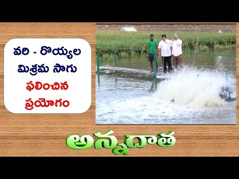 Record Yields In Rice | Prawn Mixed Culture | Success Story of W.G Farmer || ETV Annadata
