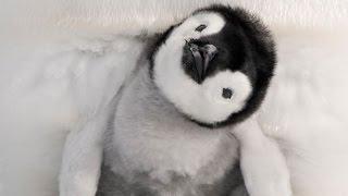 Penguin Awareness Day!