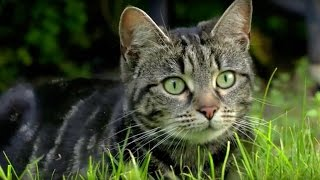 Why Do Cats Hunt? | Cats Uncovered | BBC