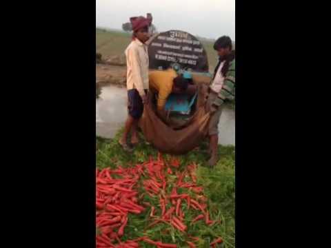 Carrot cleaning machine गाजर साफ करके बोरे में भरे वाली देसी मशीन gaajar saaf karke bore main bharne