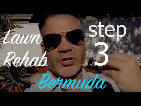 Southern Lawn Rehab - Bermuda - Step 3 - Weed Control