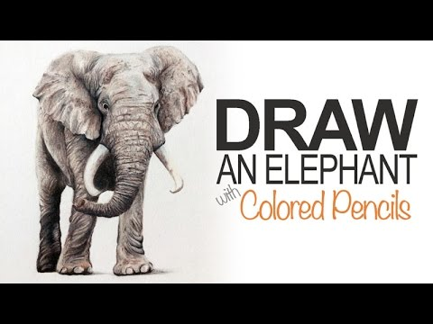 How to Draw an Elephant - Colored Pencils