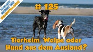 Tgh 125 Neuer Hund: Welpe, Hund Aus Dem Tierheim Oder Auslandstierschutz