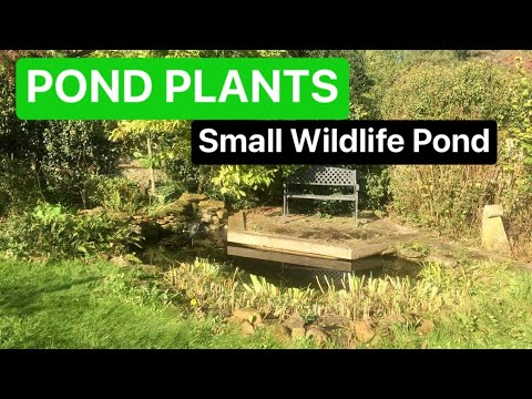 What plants are suitable for a small wildlife pond?