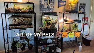 ALL OF MY PETS (Animal Room Tour)