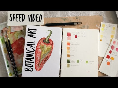 Speed Video: Botanical Art Pepper Tutorial with Voice Over ~ WATERCOLOUR by Scarlett Damen