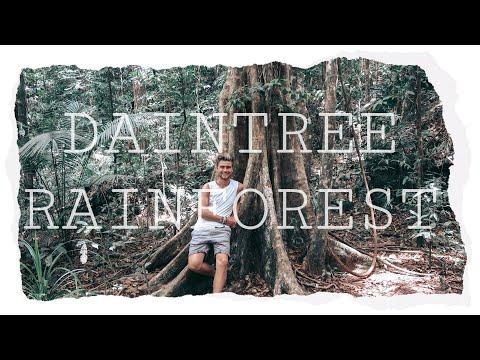 Daintree Rainforest // Australia // Backpacking Vlog 24 🇦🇺