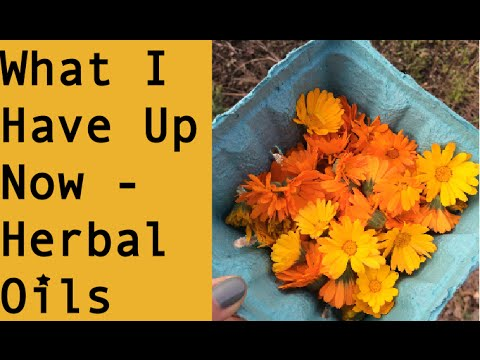 What I have up now - Herbal Oils - November 2015