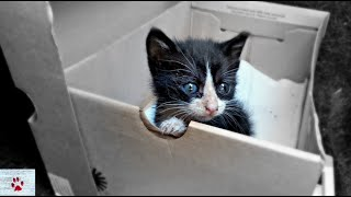 The lonely kitten in the cardboard box