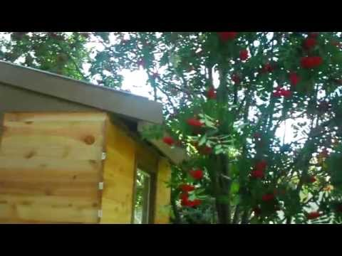 More siding and more tips with the garden shed